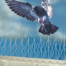 Hroty a sítě proti ptactvu